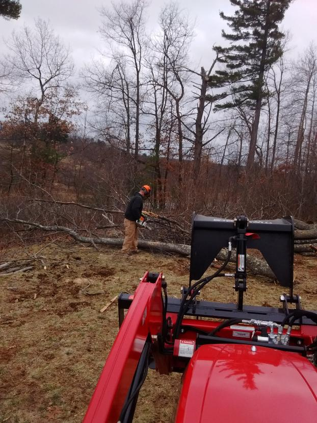 Tree removal Londonderry, NH